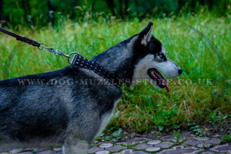 Attractive Leather Spiked Studded Dog Collar For Husky