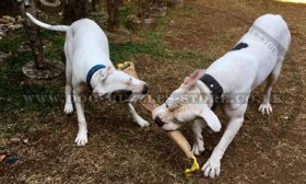 Dog Training Jute Tug with Handles for Biting and Prey Drive