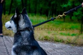 """Blessed Innocence"" Soft Rounded Choke Collar For Husky Training"