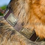 GSD Collar with Dotted Brass Plates | Designer Dog Collar