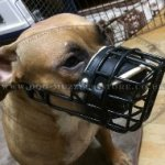 Rubber-Coated Pitbull Cage Muzzle for Large Dogs for Any Weather