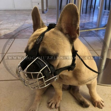 Best Muzzle for French Bulldog | Basket Muzzle for Frenchie