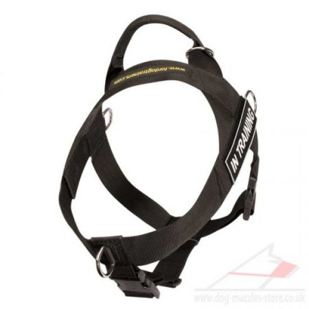 Best Labrador Dog Harness to Stop Pulling