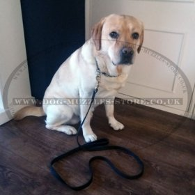 Leather Dog Lead of Classic Design - Perfect for Large Dogs