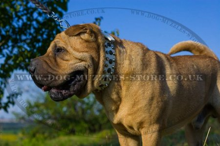 Trendy White Studded Dog Collar For Shar Pei