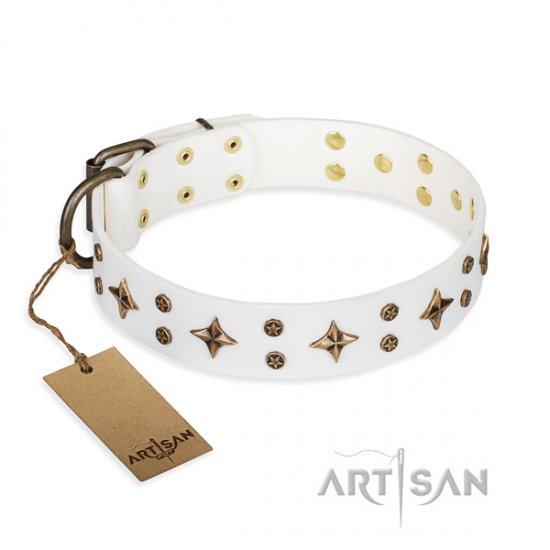 Great White Dog Collar FDT Artisan 'Bright Stars'
