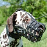 Double Padded Dog Muzzle for Dalmatian Comfort and Safety