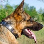 Dog Collars for German Shepherd for Sale from the Producer