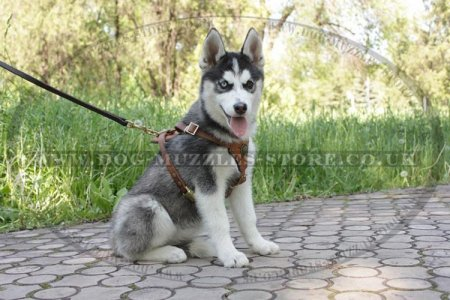 Black Padded Dog Harness For Husky Puppy Daily Use