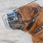 Shar Pei Muzzle UK | Best Dog Muzzle for Shar Pei Dogs