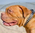 Studded Leather Dog Collar for Dogue De Bordeaux Glancing Style
