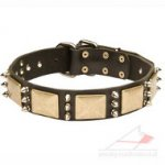 Designer Leather Dog Collar With Brass Plates and Nickel Spikes