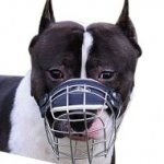 Best Dog Muzzles UK | Staffie Muzzles Wire Baskets