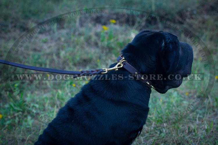 """Shiny Spikes"" Splendid Dog Collar For Shar Pei With Spikes"