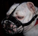 English Bulldog Muzzle Wire Basket