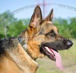 German Shepherd Collars | Leather Dog Collars War Style