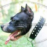 Staffie Collar Spiked 2 Ply Nylon | Nylon Dog Collar for Staffie
