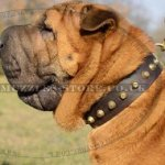 Dog Leather Collars for Chinese Shar Pei with Brass Pyramids