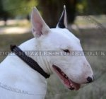 The Best Collar for English Bull Terrier with Belt Buckle, 2 Ply