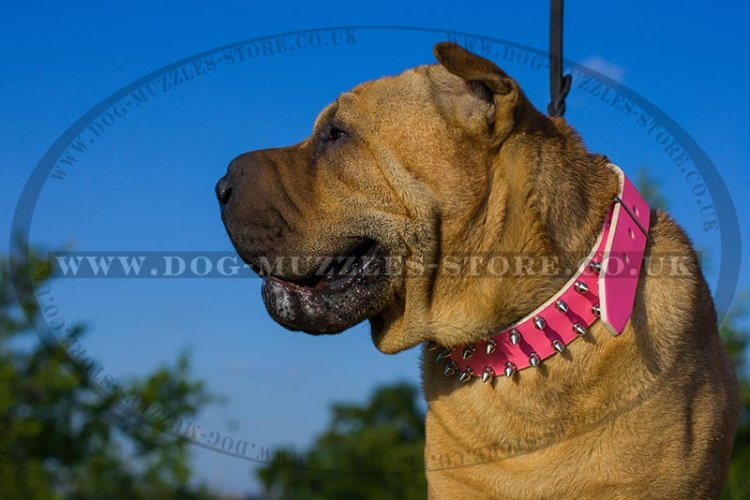 Pink Leather Dog Collar For Shar Pei UK