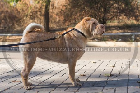 """Simple Honesty"" Leather Choke Dog Collar For Shar Pei"