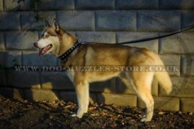 Strong And Comfortable Nylon Siberian Husky Dog Collar