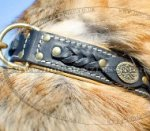 German Shepherd Collars UK Bestsellers!