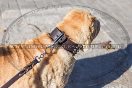 """Outright Gift"" Tough Leather Shar Pei Dog Collar 3"" Width"