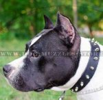 Spiked Dog Collar UK | Best Dog Collar for Amstaff