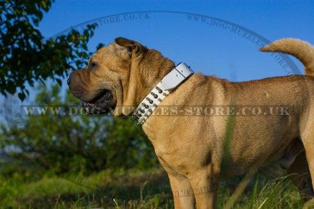 """Perfect Look"" Ultramodern Brown Leather Dog Collar For Shar Pei"