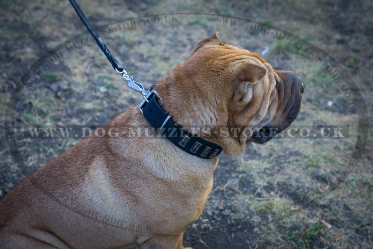 """Necklace"" Stylish Shar Pei Dog Collar With Silver-Like Studs"