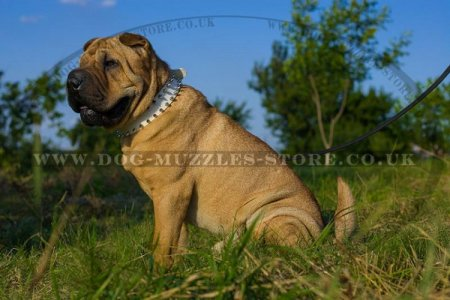 """Rose"" Extravagant Leather Dog Collar For Shar Pei With Spikes"