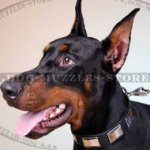 Elegant Dog Collar Studded Leather | Doberman Collars UK Best