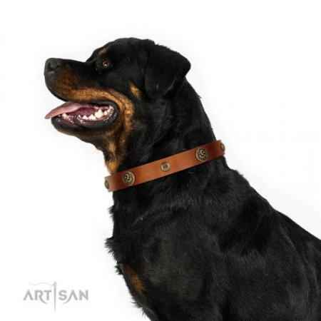 "Adorned Natural Light Dog Collar FDT Artisan 1"" Width"
