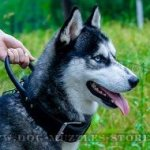 Husky Training Dog Collar with Handle, Steel Hardware