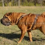 Buy Shar Pei Harness UK Best Choice from The Producer Directly