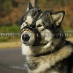 Alaskan Malamute and Husky Soft Muzzle for Stop Dog Barking
