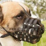 Padded Leather Dog Muzzle with Nappa Lining for Alabai