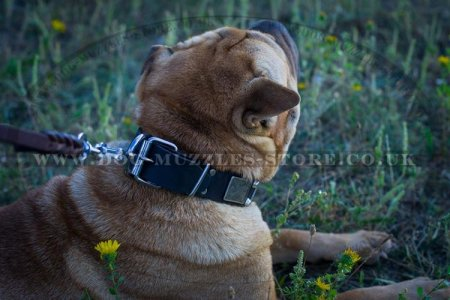 """Solid Boss"" Strong Leather Dog Collar For Shar Pei With Plates"
