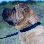 Smart Dog Collar for Shar Pei Training and Walking 1 In Wide