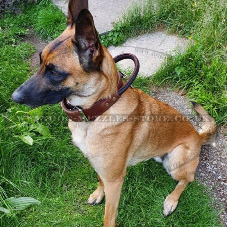 Dog Collar with Handle for Utmost Comfortable Fast Control