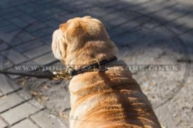 """Large Snake"" Durable Leather Choke Dog Collar For Shar Pei"