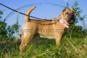 """Venetian Walk"" Pink Leather Dog Collar For Shar Pei"