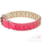Purple Dog Collars with Spikes | Pretty Dog Collars ✯&#10