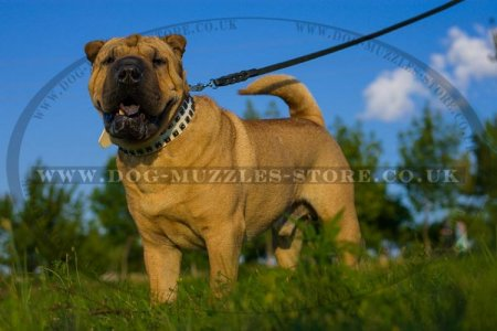 """Midnight Sun"" Exclusive White Leather Collar For Shar Pei"