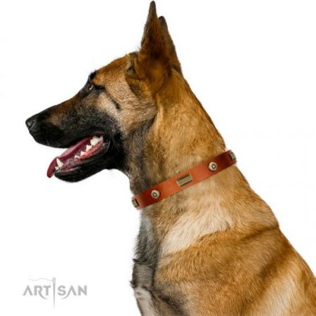 Natural Leather Dog Collar FDT Artisan Exclusive Design