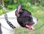 Leather Dog Collar with Studs for Amstaff