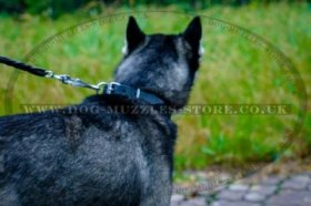 """Walk The Rounds"" Classic Soft Padded Leather Collar For Husky"
