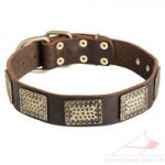 Large Dog Collars with Brass Plates | New Leather Dog Collars UK
