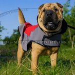 The Best Warm Dog Coat for Shar Pei Walking in Frost and Rain